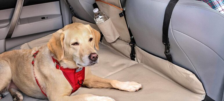 7 Ways to Secure Your Dog in the Car